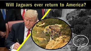 Jaguar Miscellaneous Videos