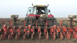 Massey Ferguson 7620 & 6480, planting Sugar Beet, Norfolk Fenland 13/03/2014.