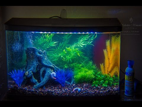 Fish less tank cycling 15 8 gallon freshwater tank youtube for Cycling a fish tank
