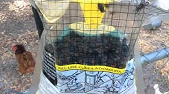 Disgusting maggots, fly catching bag rescue fly trap bug pest control DIY