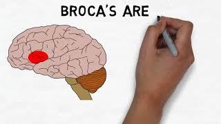 2-Minute Neuroscience: Broca's Area