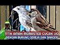 Titik Aman Memaster Cucak Ijo Dengan Burung Gereja Dan Sanger  Mp3 - Mp4 Download