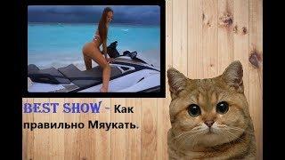 Как правильно Мяукать - BEST SHOW