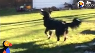 Dog Tries to Fetch The Moon | The Dodo