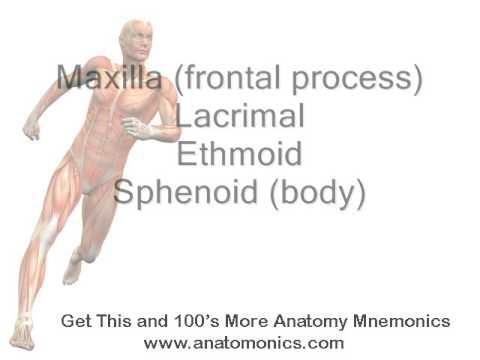 orbit bones of medial wall mnemonic - youtube, Human Body