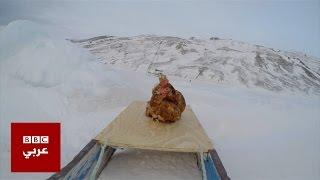 الدجاجة مونيك تبحر مع صديقها الفرنسي حول العالم