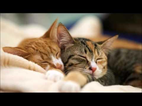 3 stunden katzen schnurren einschlafen entspannen meditieren youtube. Black Bedroom Furniture Sets. Home Design Ideas