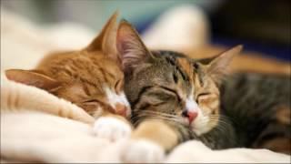 🎧3 Stunden Katzen Schnurren - Einschlafen | Entspannen | Meditieren