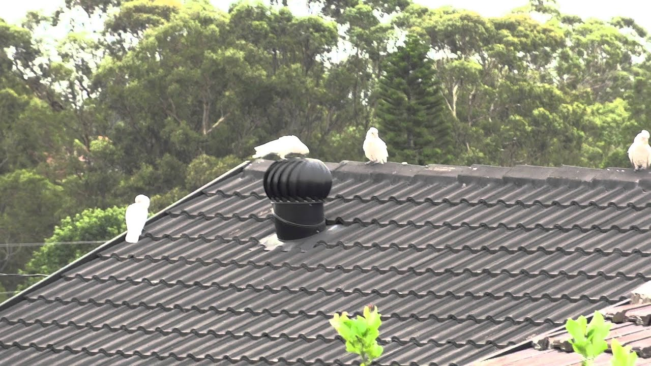 how to install whirlybird on metal roof