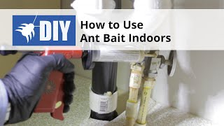 How to Use Ant Bait Indoors