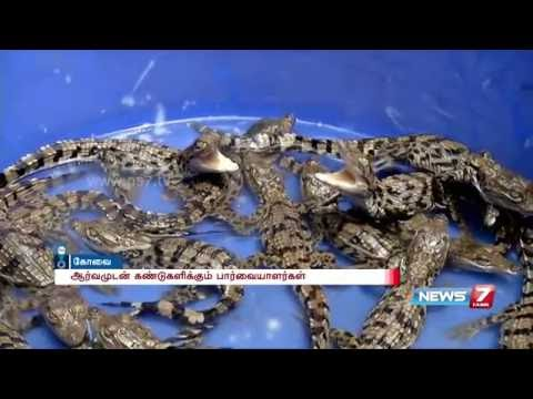 Baby crocodiles at VOC park and zoo Coimbatore attracts tourist   News7 Tamil