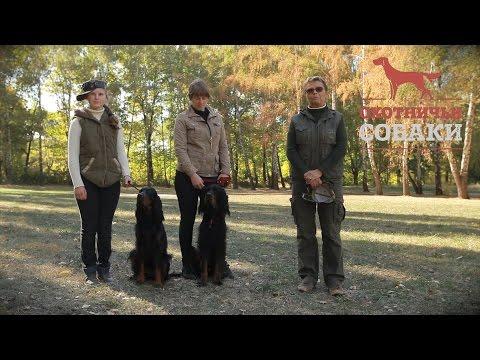 Охотничьи собаки. 11 серия. Шотландский сеттер
