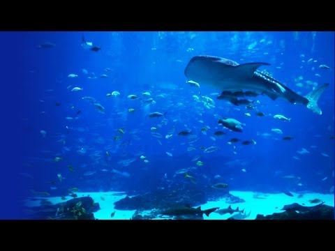 Beautiful 6-Hour Ocean Voyager Aquarium Screensaver (HD) wit