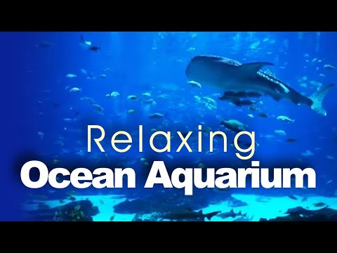 Beautiful 6-Hour Ocean Voyager Aquarium Screensaver (HD) with Relaxing Music