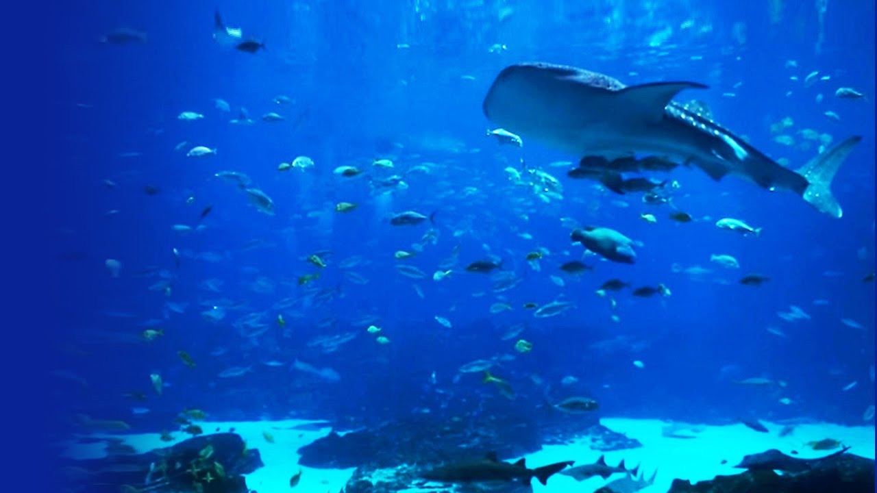 Beautiful Hd Aquarium Video Georgia Aquarium Ocean