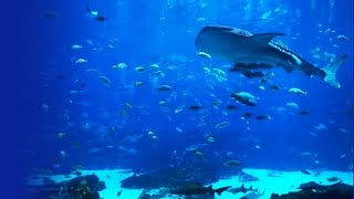 6 HOUR Peaceful Aquarium - Ocean Voyager I screensaver video (HD video)(Ocean Voyager I. A 6 Hour- Peaceful Aquarium fish tank in HD. Calming ocean aquarium / fishtank with soothing instrumental music. Relax while you zen out., 2013-08-11T16:31:54.000Z)
