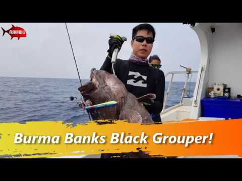 Burma Banks Offshore 2018 - Black Grouper by LES