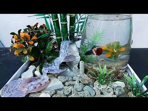 Membuat Aquarium Dari Teko Bekas Teapot Aquarium Youtube