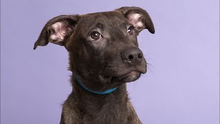 Live: Adoptable Puppy from Puerto Rico Plays With Friend in NYC | The Dodo Live