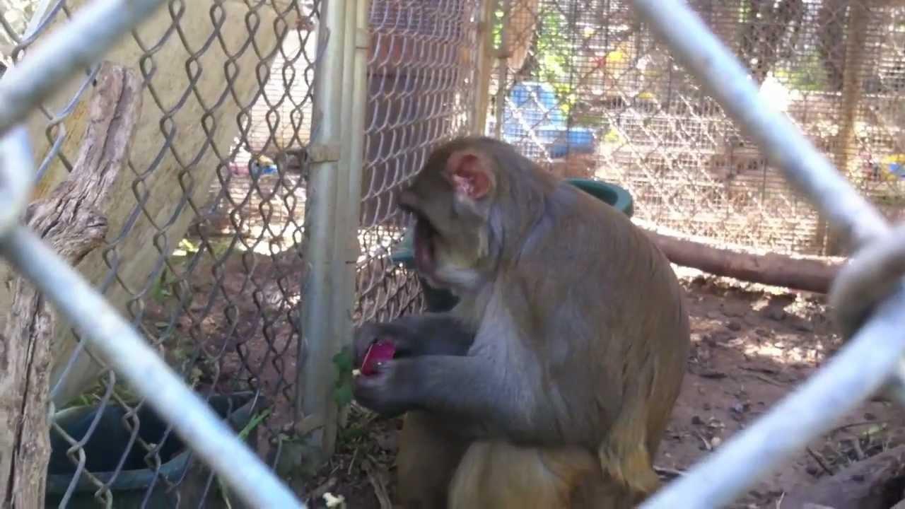Backyard Zoo - Mostly Monkeys + other Exotic Animals - YouTube