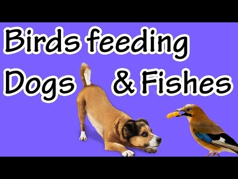 PK Birds feeding dogs and fishes