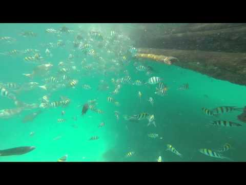 Roilo, the Awesome Fish Sanctuary of Looc, Romblon, Philippines 3