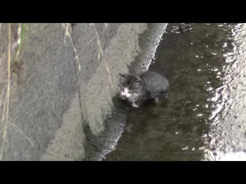 用水路に落っこちた子猫救出!