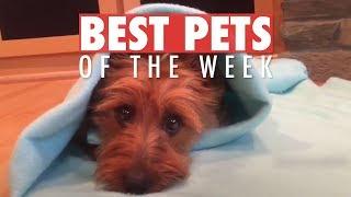 Best Pets of the Week | June 2018 Week 2 Video