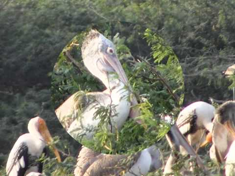 Bird Photography at Upalapadu, Guntur, AP.
