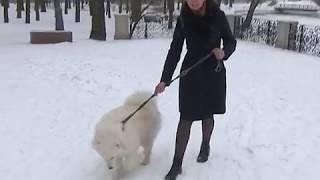 Если украли собаку...
