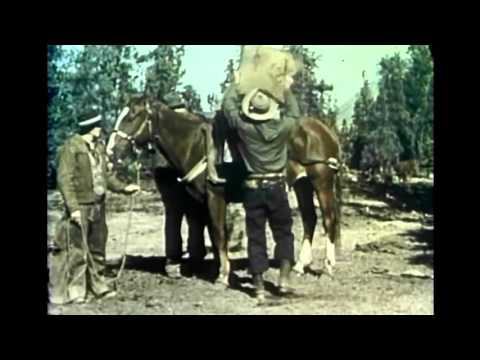 Fred Bear & Classic Archery