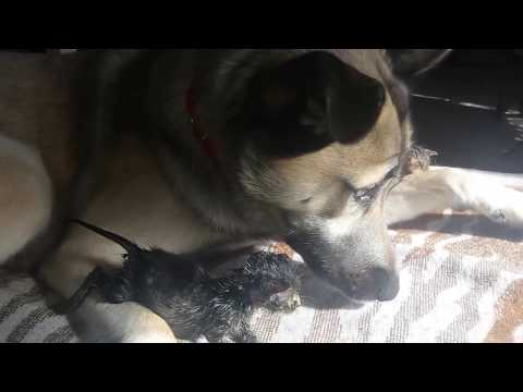 Pies który kocha koty!!!