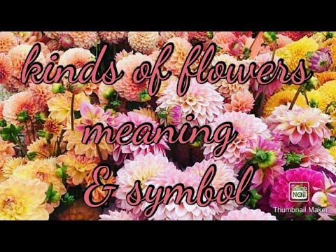 Kinds of flowers  Meaning & symbol|•hopie21 Channel
