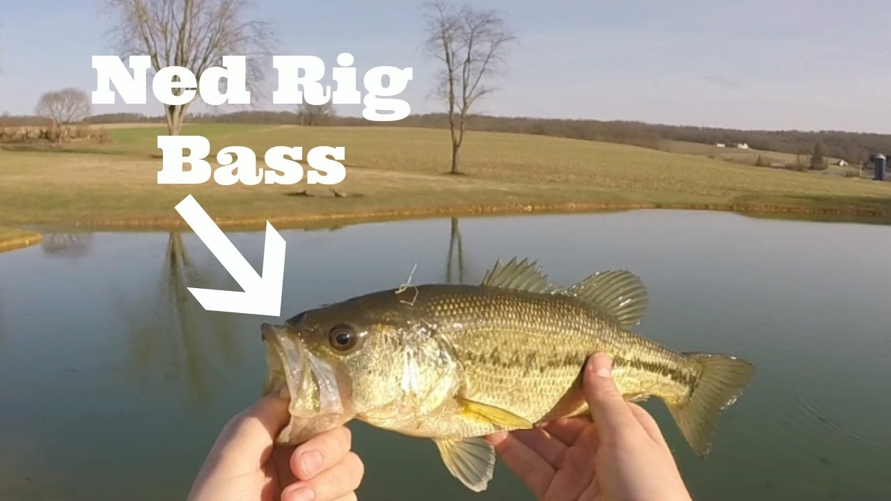 Finesse fishing ponds for spring bass pond fishing pt for Spring bass fishing