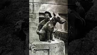Irish Terrier in a field of Poppies  True Dogs of War