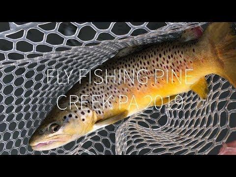 Fly Fishing Pine Creek PA 2019