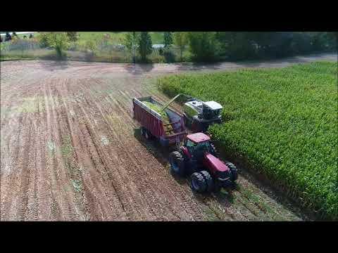 Corn Chopping near New London WI