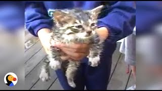 Kid Is SUPER EXCITED For Kittens To Be Rescued by Firemen | The Dodo