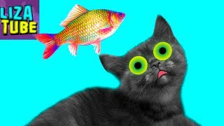 Ловим рыбку для КОТИКОВ ВЛОГ Коты на РЫБАЛКЕ Смешные кошки