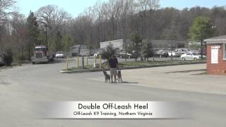 2-year Old Pit Bull Before/after Video! Off-leash K9 Training Northern Virginia, Dc, Md.