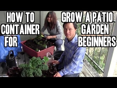 How to Grow an Easy Patio Apartment Container Garden for Beginners