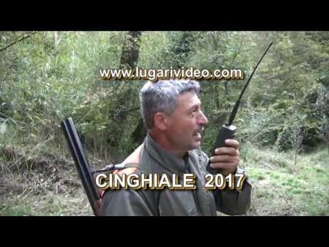 Lugari video: caccia al cinghiale 2017