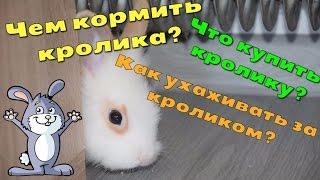 Чем кормить кролика, что купить кролику, как ухаживать за декоративными кроликами(, 2016-08-21T00:04:56.000Z)