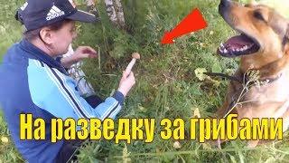 Что мы  нашли в лесу?  // Красота грозового фронта // Жизнь в деревне
