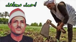 الشيخ احمد مجاهد قصة نسمه وصلاح  كامله