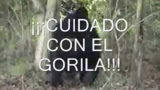 GEORGES BRASSENS. EL GORILA SUBTITULOS EN ESPAÑOL