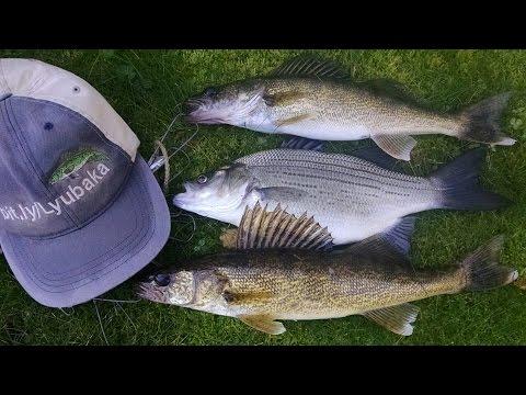 Split shot walleye fishing 10 11 15 wisconsin dells dam for Wisconsin dells fishing report
