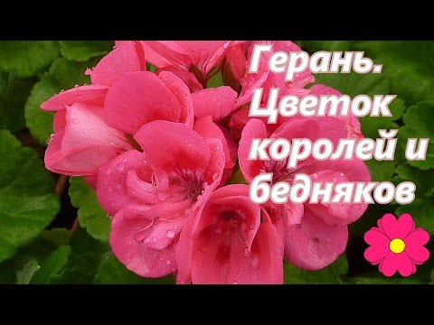 Видео Целебные свойства растений