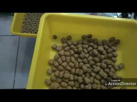 (免運費)美國mazuri大乖乖(1公斤)分裝包-陸龜飼料(陸龜 蜥蜴 草食 蘇卡達 豹龜 亞達可用)