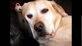 DISTURBED snoring dog sleeping with eyes open